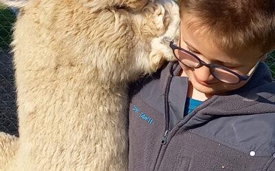Unser Alpaka-Flüsterer